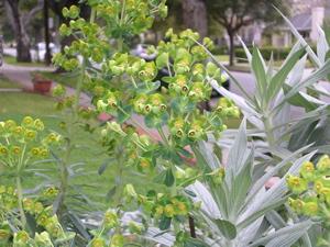 tertiary blooms